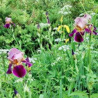 Сад без садовника :: Tanja Gerster