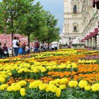 Цветочный ковёр на Красной площади у ГУМа. :: Татьяна Помогалова