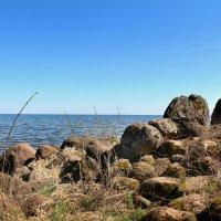 Чудское озеро :: Marina Pavlova