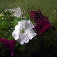 Дождь за окном :: Ирина Румянцева