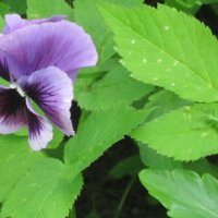 Зелёный кузнечик и синий цветочек :: Дмитрий Никитин