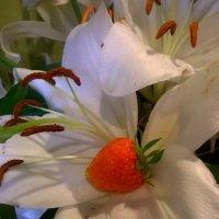 Сладкая лилия :: Евгения Коркунова