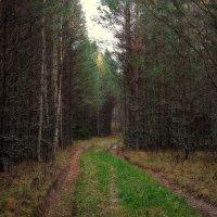 Дорога из мрачного леса... :: марк