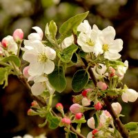 сады цветут 3 :: Александр Прокудин
