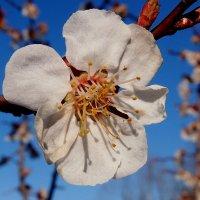 сады цветут 5 :: Александр Прокудин