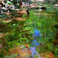 Про акварель ручья лесного.. :: Андрей Заломленков