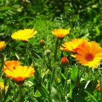 Хорошего солнечного денёчка всем... ! :: Любовь К.