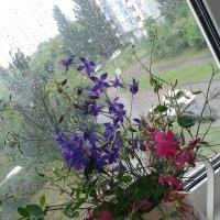 На балконе :: наталия