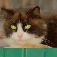 блеск зеленых глаз :: Александр Прокудин