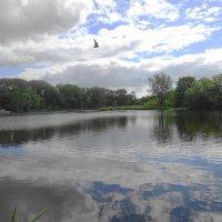 Одинокая чайка парит в вышине :: Маргарита Батырева