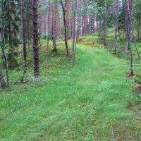 2 7 17 зелёная река заросшей дороги :: Юрий Бондер