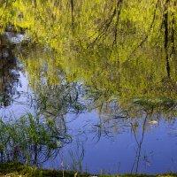 Лесная речка :: Светлана Ку