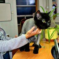 Модный кот! :: Михаил Столяров