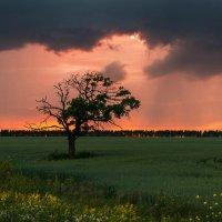Одиночество :: Александр Тулупов
