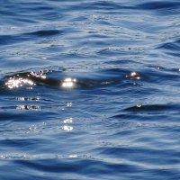 Искорки солнца блестят на волне озера :: Маргарита Батырева
