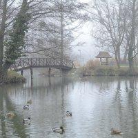 Хмурое утро в старом парке :: Николай Танаев