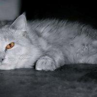 О чем думает кот... :: Людмила Богданова (Скачко)
