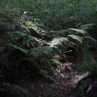прогулка по лесу 2 :: Евгений Вяткин