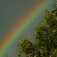 кусочек радуги :: Любовь Потравных