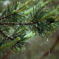 Когда идёт дождь... :: Ирина Румянцева