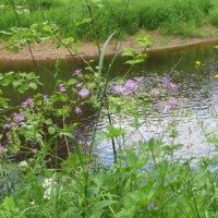 Река Ящера :: Маера Урусова