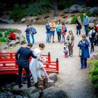 Прогулка в парке. A там одни свадьбы.V :: Arturas Barysas