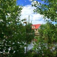 Дом у озера :: Алла ZALLA