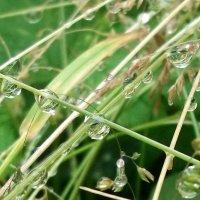 И дождей грибных серебряные нити :: Тамара Лисицына