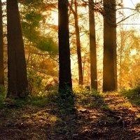 Свет восходящего солнца. :: Ич Ни