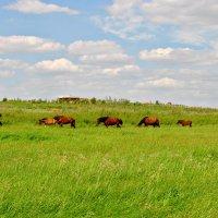 лошади на ветру :: Наталия Захарова