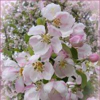 Нежный май :: lady v.ekaterina