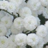 Когда цветов много. :: Вячеслав Медведев