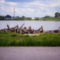Озеро у города :: Наталья Копылова