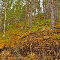 Холм :: Илья Магасумов