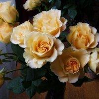 Розы :: Анна Воробьева