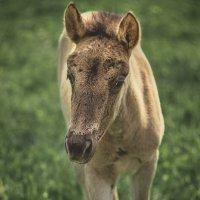 Ну очень грустная лошадка. :: Lidija Abeltinja