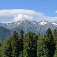 Снежные вершины Кавказа. :: Светлана Исаева