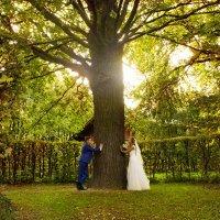 Японцы говорят, что мужчина - это дерево... :: Анастасия Райкова