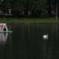 белый лебедь плывёт :: Яков Реймер
