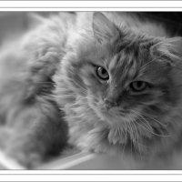Мой ласковый и нежный зверь. :: Наталья Соколова