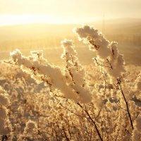 морозный вечер :: Юлия Маркелова