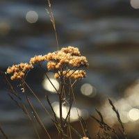 Северные цветы :: Виктория Браун