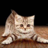 Я - кот! :: Михаил Власов