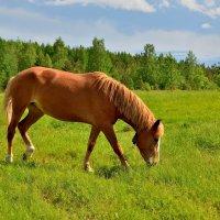 Рыжий конь. :: Илья Магасумов