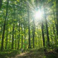 Утро в лесу :: Сергей Форос