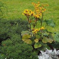 красота простых растений :: Олег Лукьянов