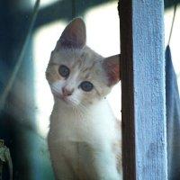El gatito :: Олег Шендерюк