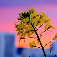 На фоне заката :: Марк Э
