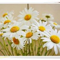 Полевой цветочек – милая ромашка, :: Любовь Чунарёва