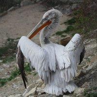 Птица :: ольга
